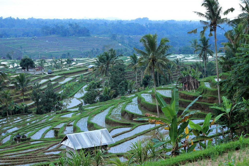 RISAIE DI JATILUWIH INDONESIA
