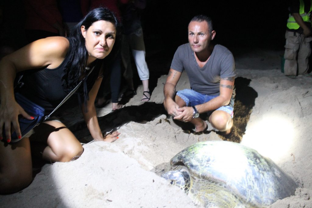 ISOLE DEL BORNEO, SELINGAN ISLAND, tartarughe marine