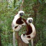 MADAGASCAR E IL TOUR DEL NORD