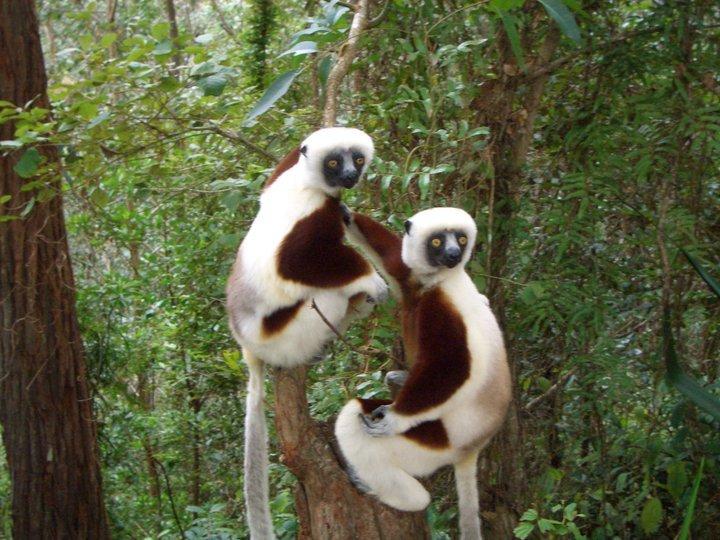 lemuri in mdagascar