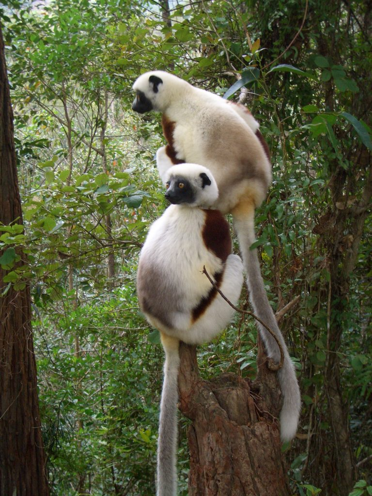 LEMURE - COSA VEDERE IN MADAGASCAR
